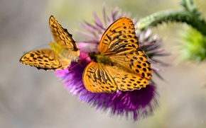 Picture butterfly, plant, insect, moth, weed, svetoe