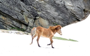 Picture ice, horse, suhart, icy horse