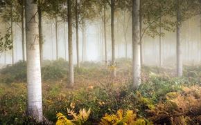 Picture autumn, fog, fern