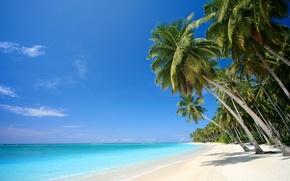 Picture sand, sea, beach, tropics, palm trees