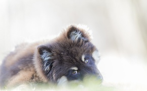 Picture look, each, dog
