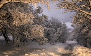 Picture snow, winter, road, trees, Kópavogur, Kopavogur, Iceland, Iceland, forest