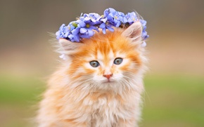 Picture flowers, fluffy, muzzle, kitty, wreath