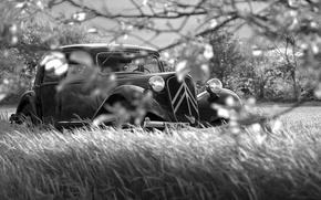 Picture grass, branches, retro, black and white, Noir