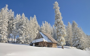 Picture winter, the sun, snow, Poland, the shed