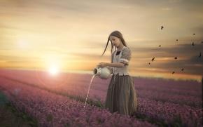 Wallpaper girl, field, flowers, sunset