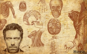 Wallpaper Hugh Laurie, house md, house