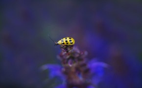Picture flower, background, plant, ladybug, blur, insect, yellow