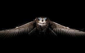 Wallpaper birds, owl