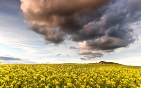 Picture flowers, yellow, nature, rape, house, field, the sky, clouds