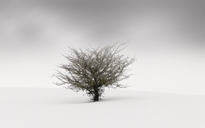 Picture fog, background, tree
