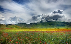 Picture flowers, mountains, field, nature, plain, valley, clouds