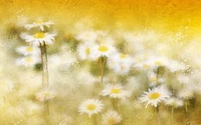 Picture background, color, chamomile