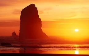 Picture sea, the sky, the sun, sunset, rock, bird