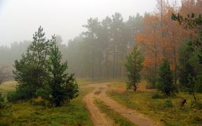 Wallpaper road, forest, landscape, nature, fog