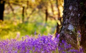 Wallpaper flowers, nature, tree