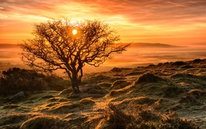 Picture frost, autumn, the sky, the sun, sunset, tree, slope