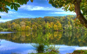 Picture autumn, forest, water, trees, reflection, river, shore, Germany, Elm