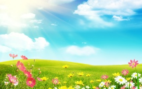 Picture field, summer, flowers, chamomile, the sun's rays, cosmos