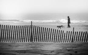 Picture waves, storm, beach, ocean, seascape, dog, man, sand, seaside, foggy, cloudy, walker, snowing, snowstorm