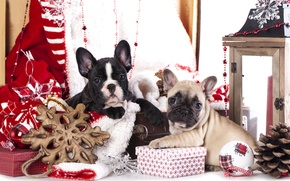 Picture dogs, decoration, puppies, gifts, French bulldog