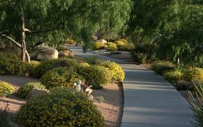 Picture greens, summer, green, plants, garden, track, Park, summer, nature, park, garden, path
