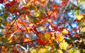 Wallpaper tree, autumn, leaves, the crimson