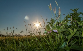 Picture nature, grass, sunset