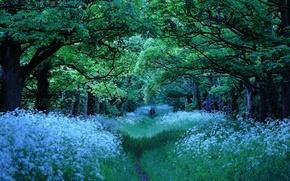 Picture road, Park, walk
