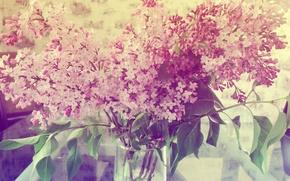 Wallpaper summer, flowers, lilac