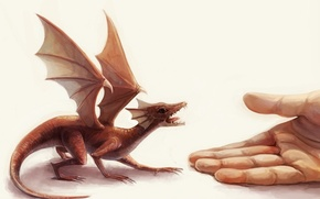Picture dragon, hand, wings, Small, palm