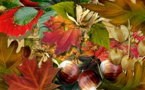 Picture autumn, leaves, nature, collage, nuts