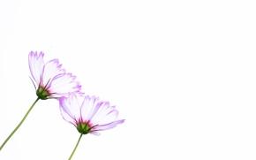 Picture flowers, petals, stem