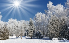 Wallpaper winter, forest, the sky, the sun, rays, nature, photo