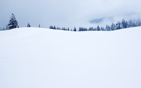 Picture Winter, Horizon, Tree