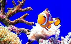 Picture sea, the ocean, color, fish, corals
