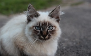 Picture cat, macro, sitting