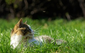 Picture grass, cat, mustache, fly, movement, stay, spring, hunting, green