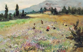 Picture field, landscape, mountains, picture, meadow, Marseille Dif, on the French Riviera, Fields at Biot