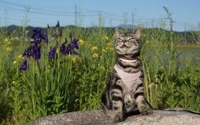 Picture cat, summer, muzzle