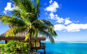 Wallpaper tropics, Bungalow, sea, sand, shore, Bora-Bora, French Polynesia, palm trees