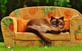 Picture greens, cat, summer, grass, cat, pose, heat, sofa, glade, oranges, garden, muzzle, fabric, lies, the …