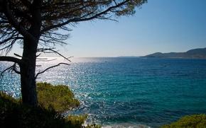 Picture sea, tree, coast, France, horizon, Cote d'azur