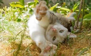 Picture cat, cat, potyagushki