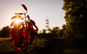 Picture City, Flower, Sun, Park, Autumn, Sunshine, Stuttgart, Garden, Fruits, Tower, Plant
