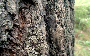 Picture Tree, Verba, Bark