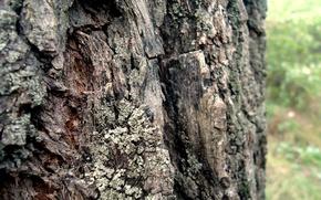 Picture Tree, Verba, Bark
