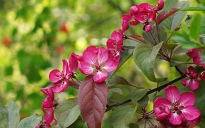 Picture branch, spring, flowering, flowers