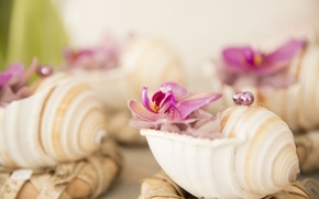 Picture flowers, shell, beads