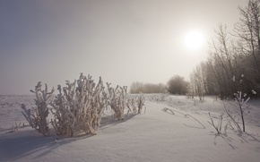 Picture winter, trees, sunset, nature, the bushes